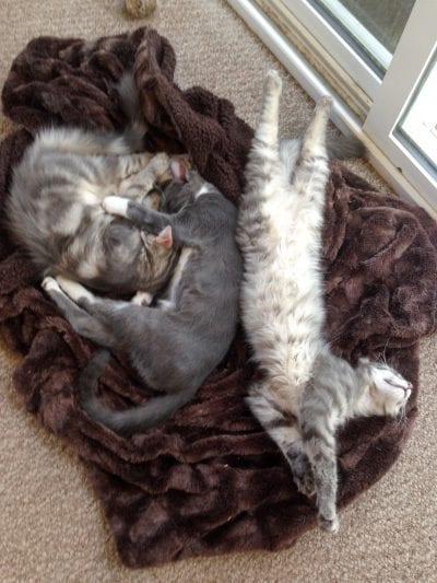 Sleeping terrorists